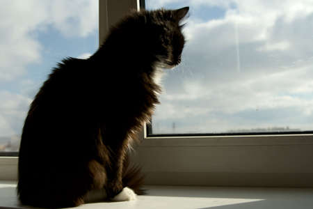 black out: House cat looking out of the window