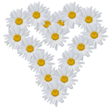 Heart from flowers of camomiles on a white background. Stock Photo - 1304063