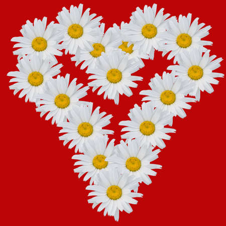 Heart from flowers of camomiles on a white background.  Stock Photo - 1327404