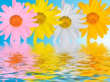 Multi-coloured camomiles on a blue background with reflections Stock Photo - 1416111
