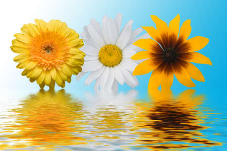 Multi-coloured flowers on a blue background with reflections Stock Photo - 1584224