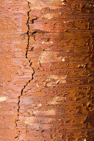 Texture from a birch bark photo