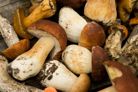 fungous: Texture their mushrooms. The reaped crop. Stock Photo