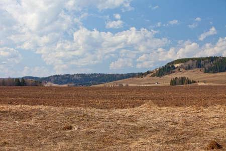 Spring agricultural landscape photo