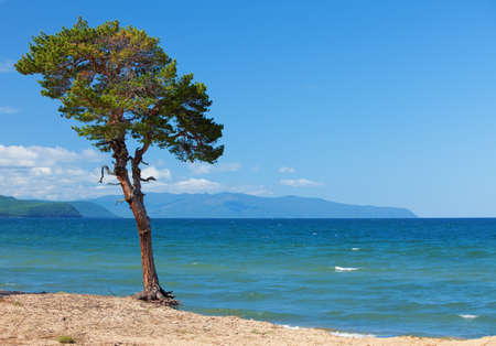 Lake Baikal. Lonely tree ashore photo