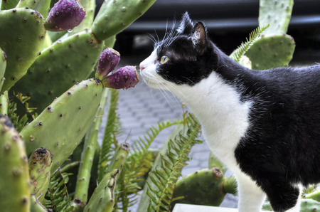 smells: Cat smells Cactus Flower