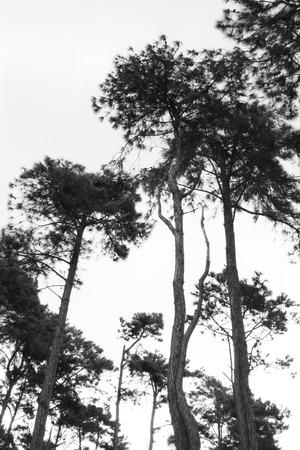 tress: tall tress in wild forest