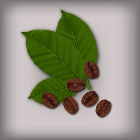 coffee leaf: Coffee beans and leaf Illustration