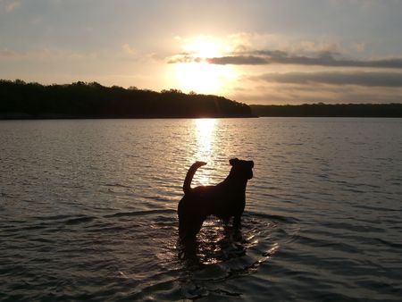 Dog standing in lake at sunset Foto de archivo