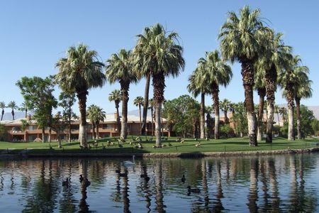 resortes: Lago con patos y palmeras en el Palm Springs