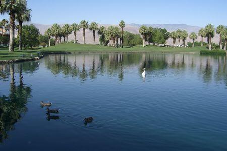 Lake with ducks at golf resort in desert