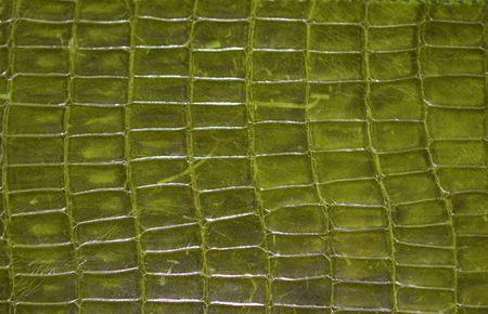 Green Reptile Print