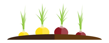Vector illustration of ridge with red and yellow onion
