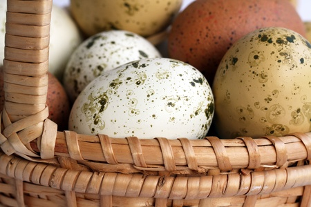 Easter eggs of different color  in a basket
