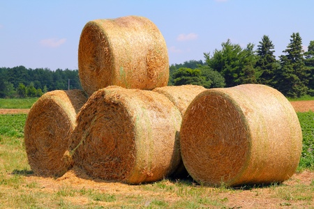 The rolls of the straw on a crop field under the blue sky Stock Photo
