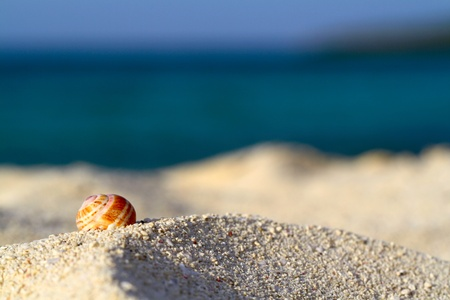 Sea shell on the beach, shallow focus Stock Photo