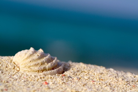 Sea shell on the sand, close-up shallow focus
