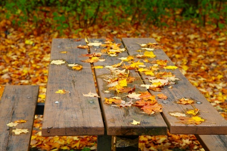 picnic table: The view of yellow leaves on the picnic table