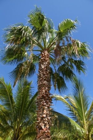 The view of the palm tree on the blue sky background. Varadero, Cuba Stock Photo