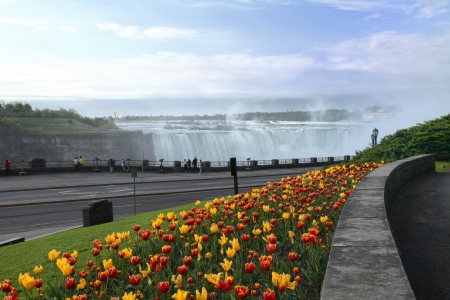 Tulip bed at Niagara Falls in May  Niagara Falls, Ontario, Canada photo