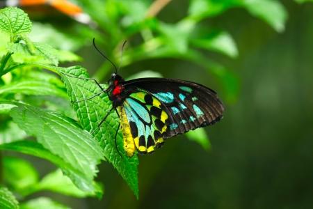 Colorfull butterfly on the green leaves background Imagens