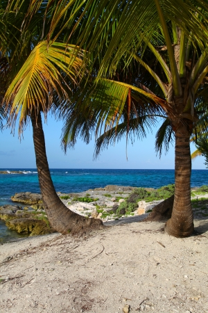 Palm trees on the tropical beach in Riviera Maya Stock Photo