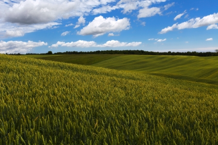 Green wheat field on the blue sky and clouds background Stock Photo