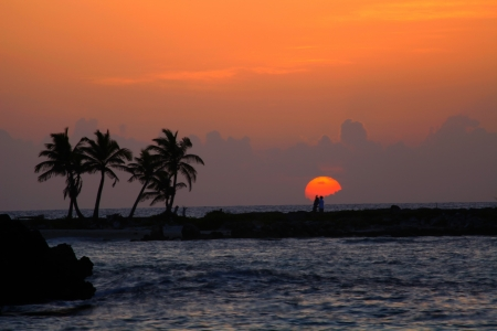 rising of sun: La promesa del sol y palmeras siluetas sobre el fondo del cielo de naranja