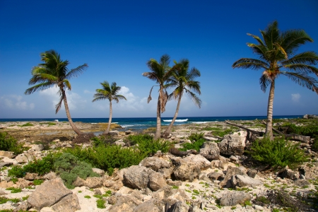 riviera maya: Rocky beach in Riviera Maya