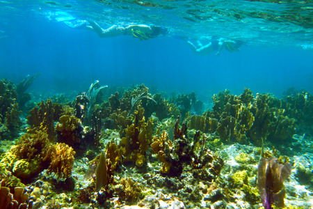 Two girls snorkeling over the coral reef Stock Photo