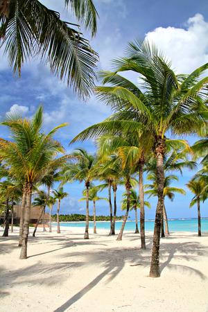 Palm trees on the beach, shallow focus