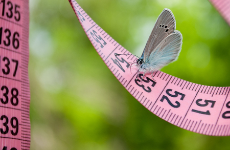 flit: Lose weight diet side view green grass measuring tape pink color figures on it sits blue butterfly close view in blurred background dream lightness flit Stock Photo