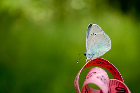 Lose weight diet side view green grass bush tree measuring tape pink color figures on it sits blue butterfly close view in blurred background dream easiness to flutter