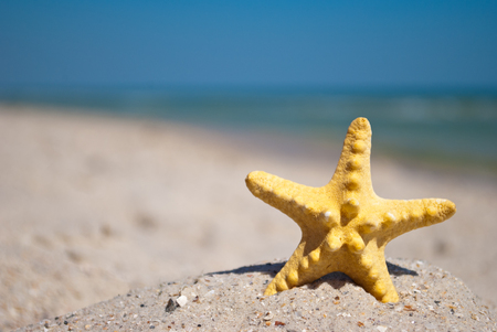 beautiful bright yellow starfish sea inhabitant on yellow sand on a blue background Kho ảnh