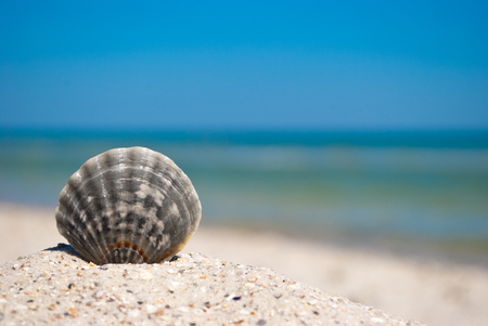 sea ??beautiful gray seashell lies on yellow sand on a background of blue sea and white wave blue sky summer vacation vacation summer day heat beach beach