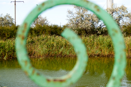green reeds on a swamp on an abandoned lake pond, in front of a metal part of a fence, a pattern of curl