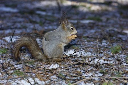 The squirrel photo