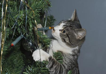 Kitten at a fur-tree. Stock Photo - 11697488
