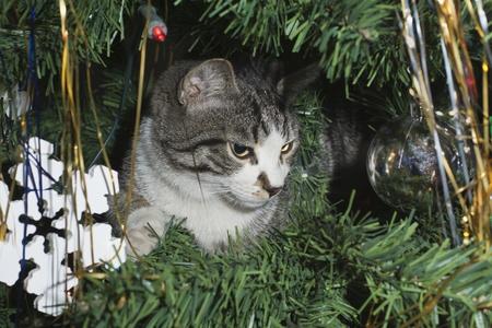 Kitten at a fur-tree. Stock Photo - 11697489