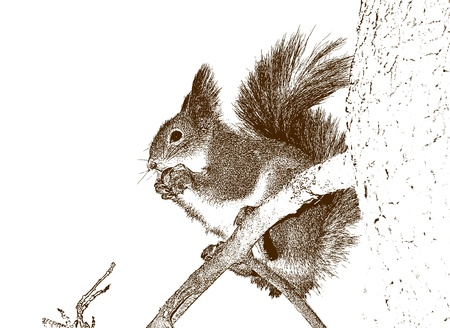 Drawing of the squirrel. photo