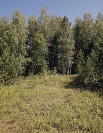brink: Meadow on the brink of wood.