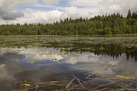 water's edge: Wood lake.