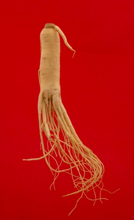 Ginseng root on a red background. photo