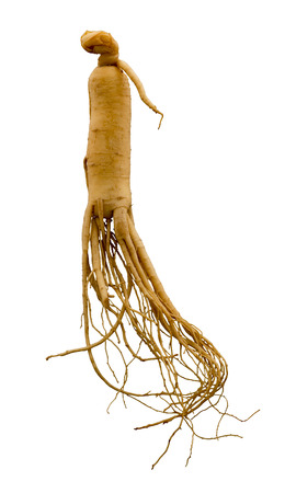 Ginseng root  Zdjęcie Seryjne