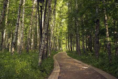 foot path: Foot path in the deciduous wood in the summer.