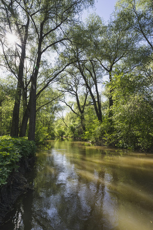 dense forest: Calm river in a dense forest.