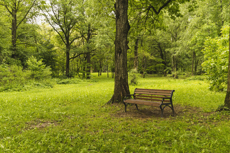 recollection: Bench in summer Park.
