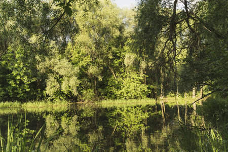 dense forest: A small lake in a dense forest. Stock Photo