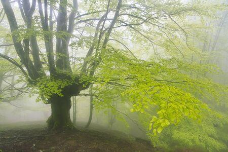 Gorbea Natural Park, Bizkaia, Basque Country - May 03, 2014.