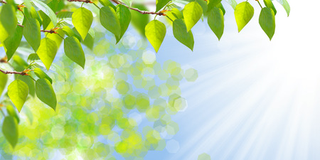 fresh leaf: Natural background in green and yellow tones with nice bokeh and sunny rays